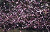 Lijst van bladverliezende fruitbomen