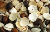 How to Make Seashell sieraden met een Dremel