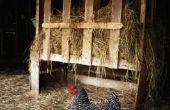 Het leven van een volwassen kip