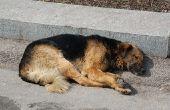 Spierziekten bij honden
