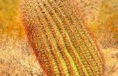 Eetbare planten in de woestijn