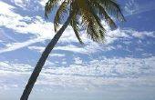 Hoe maak je strand Decor voor goedkoop