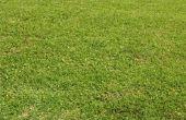 Gras problemen met witte kleine vliegen