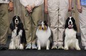 Aanwijzingen voor het maken van Leads weergeven de hond