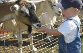 Preschool Zoo Les Plan ideeën