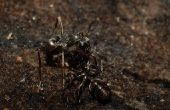 How to Get Rid van kleine keuken mieren