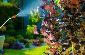 Hoe werken fungiciden?