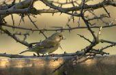 Wat Is de beste vogel voeding voor zangvogels?