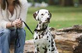 Wat zijn de oorzaken van donkere vlekken op de huid van een hond?