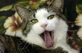 Hoe Cat slechte adem verhelpen
