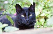 Persoonlijkheid verschillen tussen mannelijke & vrouwelijke katten