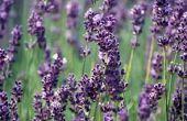 Hoe maak je lavendel linnen Spray