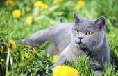 Lijst van veilige kruiden voor katten