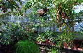 De beste planten op hydrocultuur groeien