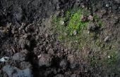 Het Effect van rottende planten op bodem