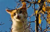 Tips voor het redden van een kat een boom