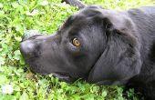 Hond vlo & Worm behandeling