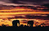 Ecotoerisme in Afrika