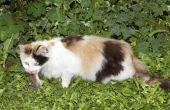 Symptomen van een kat die rattengif gegeten