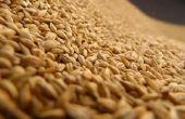 Problemen die worden veroorzaakt door rijst zemelen