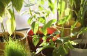 Kamerplanten die schimmel verwijderen