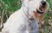 How to Train een hond niet om schors op alles