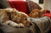 Hoe om te trainen van honden en katten to Live samen