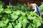 Plantaardige tuinieren in de zomer