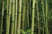 Voorkom plaatwerk bamboe zich verder verspreidt?