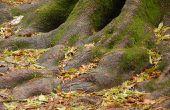 Hoe sluiten onkruid & diervoeders moeten worden om te kwetsen van een boom?