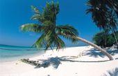 Wat de oorzaken van een palmboom tot Val?