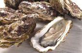 Kunnen de katten eten oesters?