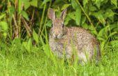 Hoe maak je een gemakkelijk Rabbit Fence