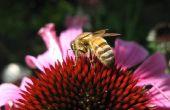 Hoe maak je een Honey Bee Feeder