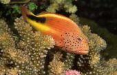 Tropische oceaan biotische factoren
