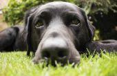 Hond Tick ziekten