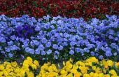Maken van een formele Flowerbed