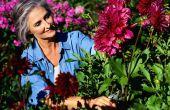 Creëren van een tuin snijden