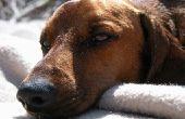 Honden zetten Baby olie voor de droge huid