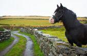 Hoe te formaat een Halter voor een paard