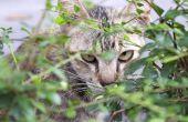 Zijn anjers giftig voor katten?