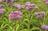 Goede planten voor landschapsarchitectuur in Kentucky
