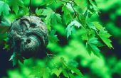 Hoe kan ik een wesp Nest opslaan van een boom?