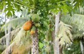 Soorten tropische vruchtlichamen bomen