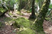Bezienswaardigheden in het tropisch regenwoud