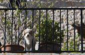 Hoe maak je een balkon geschikt voor honden