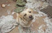 Hoe om te helpen een hond met verlatingsangst