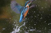 Vogels van ijs in de mythologie