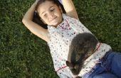 Hoe de zorg voor een Outdoor konijn