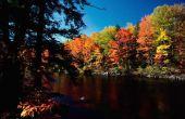 Bladverliezende wouden bioom Facts for Kids